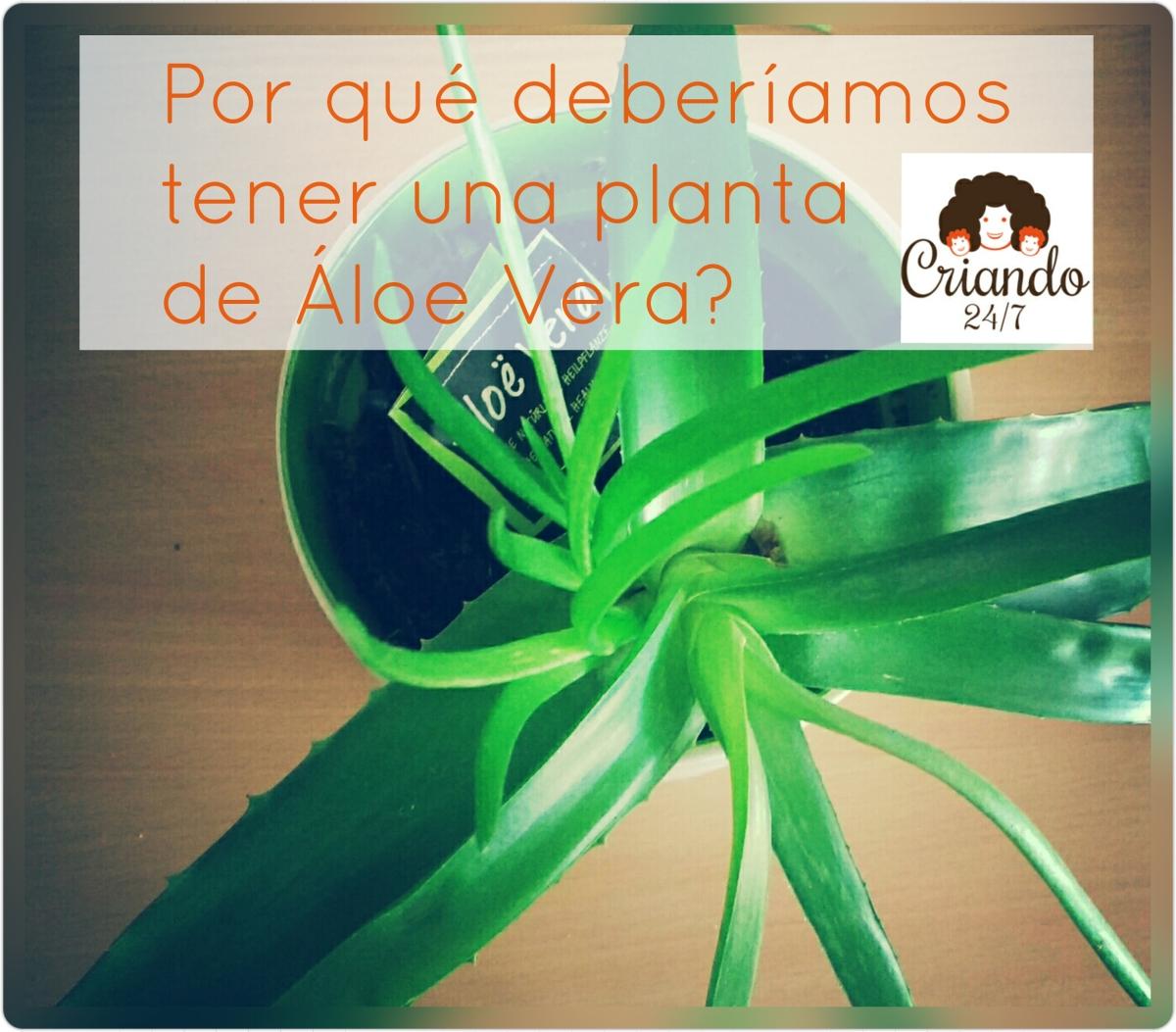 Por qué deberíamos tener una planta de Aloe Vera en casa?