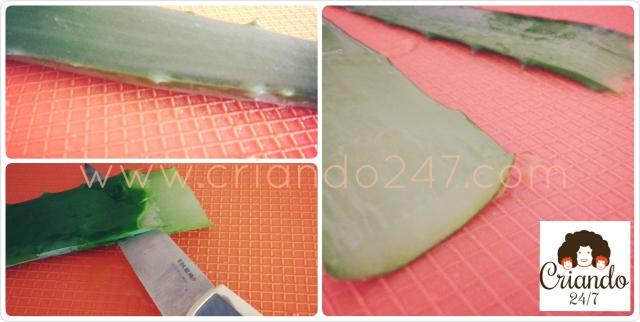 Criando247 Aloe Vera6