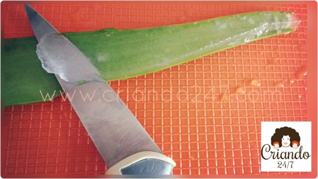 Criando247 Aloe Vera7