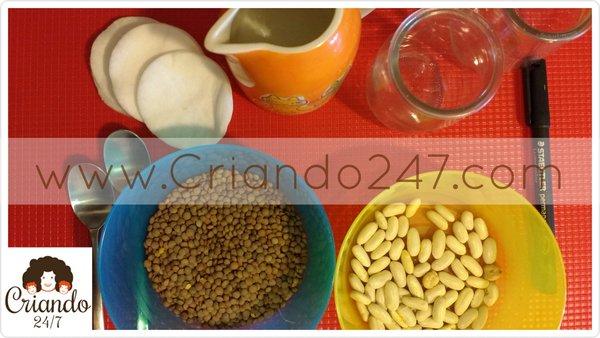 criando247GerminacionDia0